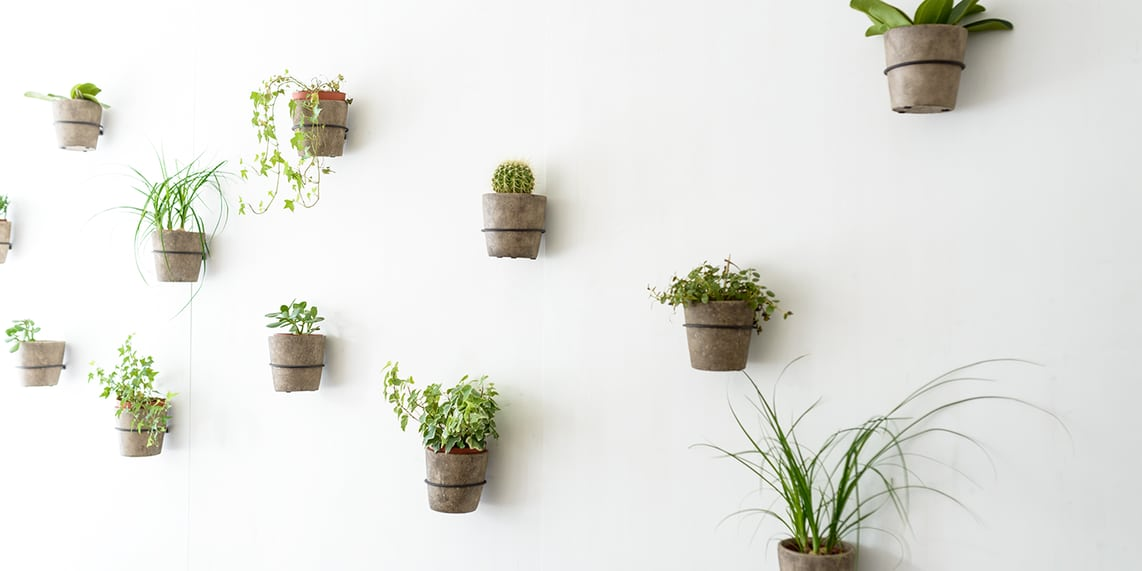 different-plants-hanging-wall.png